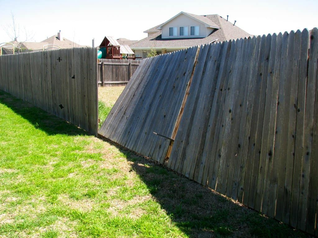 Fallen cedar fence from storm winds